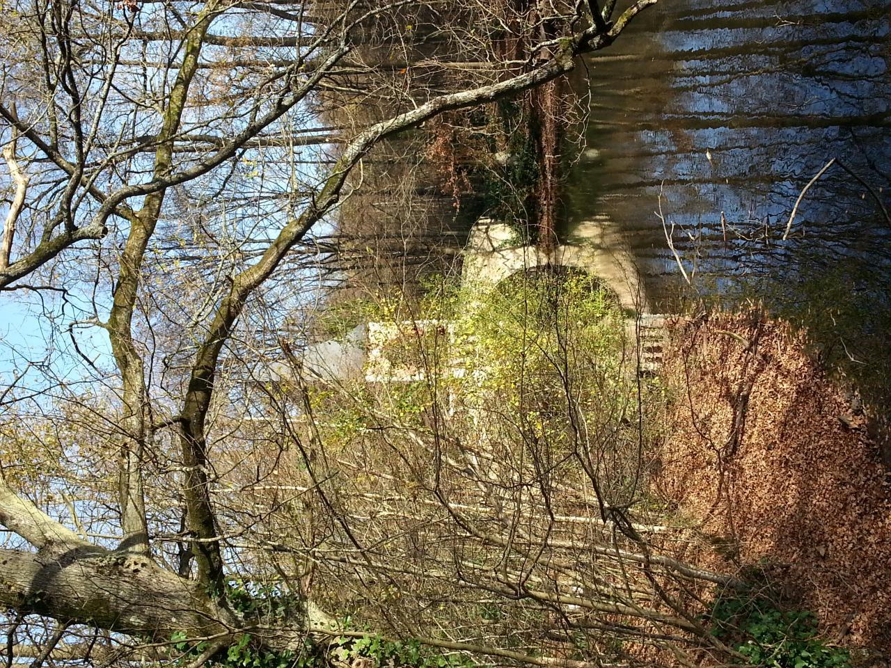 bonnelles étangs (3)