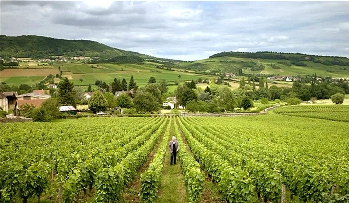 Sang vigne bourgogne vallee vaux